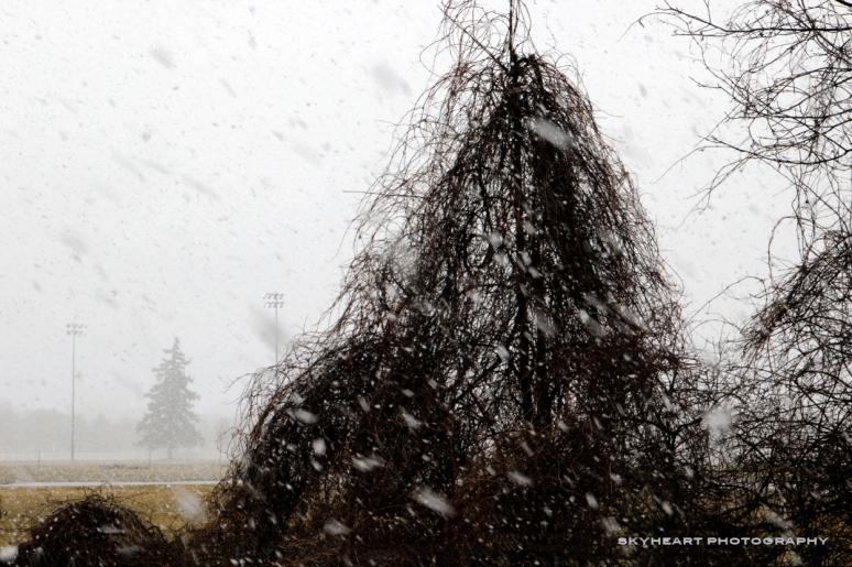 April 13, 2013 - Snow???